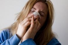 állatbarát munkahely, allergia, asztma, betegség, egészség, iroda, jólét, kutya, levegő, macska, munkahely, munkavállaló, szellőzőrendszer
