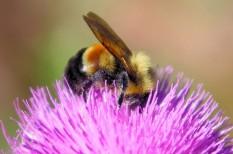 beporzás, bioszféra, fajpusztulás, gyomirtó, kemikália, környezetszennyezés, meh, neonikotinoid, ökoszisztéma, rovar, rovarirtó, tápláléklánc, vegyszer