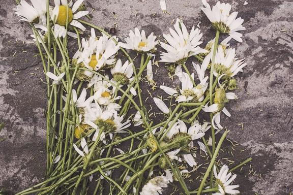 hervadt virágok a földön
