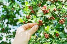 gmo, gmo mentesség, gmo-növények, gmo-szabályozás, mezőgazdaság, növénytermesztés