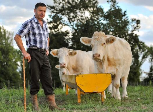 gazda tehenekkel