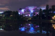 ázsia, biomimikri, botanikus kert, dizájn, élhető város, építészet, légszennyezés, levegő, ökováros, park, szingapúr