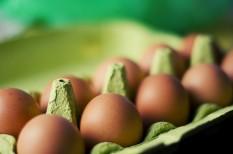 élelmiszerbiztonság, fogyasztóvédelem, nébih, tojás