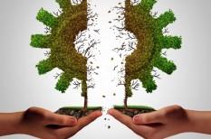 fenntarthatóság, környezettudatosság, megosztás gazdasága