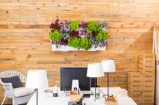 egészséges munkahely, zöld iroda