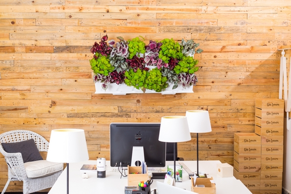 vertikális kert irodában