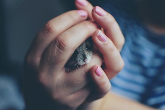 hörcsög kézben