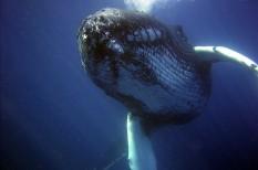 antarktisz, bálna, bálnák, klímaváltozás, kutatócsoport