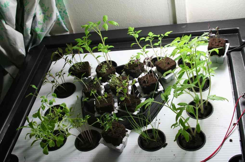 Növények - infúzión (fotó: Flickr/Jarvis Frost)