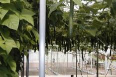 agrár, agrárium, élelmiszer, mezőgazdaság, növénytermesztés, vertikális farm