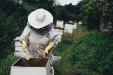 agrártámogatások, méhészet, mezőgazdaság