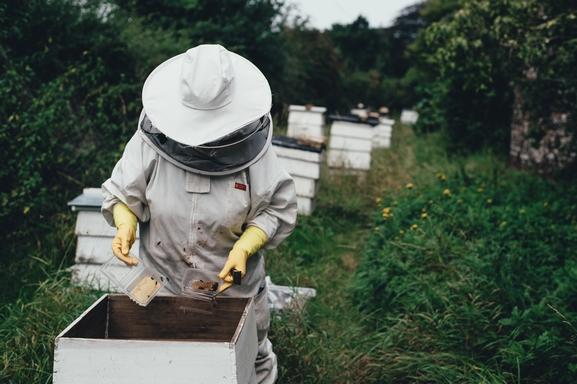 méhész dolgozik