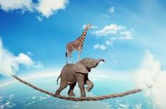 bizalmi tőke, cégsiker, csapatmunka, elon musk, fluktuáció, mikromenedzsment, vezetési stílusok, vezetői bizalom