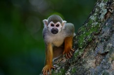 afrika, állatfajok, állatvédelem, állatvilág, kihalási hullám, klímaváltozás, környezetvédelem