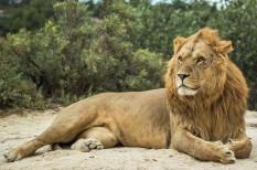 állatvédelem, biodiverzitás, fajpusztulás, természetvédelem, túlnépesedés, veszélyeztetett faj