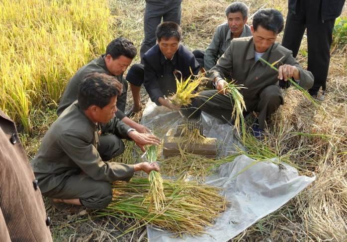 Súlyos károk az agráriumban, megsínylette a szárazságot a rizs, kukorica, burgonya és szójabab. Kép: FAO/Cristina Coslet