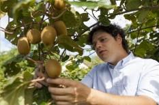 agrárium, kivi, mezőgazdaság