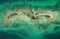 klímaváltozás, nagy-korallzátony, tengeri élővilág, természetvédelem, wwf