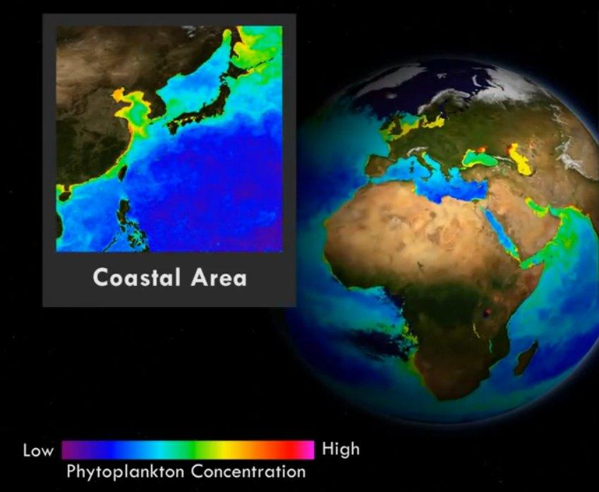 Európában is probléma a halálzónásodás - lásd a sárgás részt. (fotó: YouTube/NOAA)