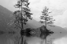 az év fája, fehér nyárfa, hárs, klímablog, környezetvédelem, tölgyfa, vadkörte, zöld övezet