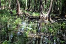 agrárerdészet, erdészet, erdő, erdősítés, mezőgazdaság, sivatagosodás