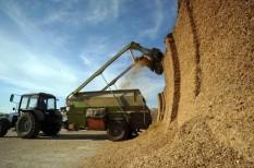 alapvető élelmiszer, élelmiszerár-index, élelmiszerárak, fao, gabona, tejtermékek