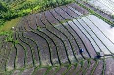 agrár, éhezés, éhínség, élelmezés, élelmiszer, fao, kína, mezőgazdaság, tápanyag