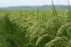 agrárátmogatás, budapest bank, mezőgazdaság