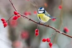 környezetvédelem, madáretetés, Magyar Madártani Egyesület