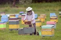 fao, klímavédelem, méhészet, méhpusztulás, méztermelés