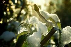 biztosítás, időjárás, jégkár, vihar