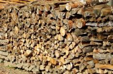 bútoripar, fakitermelés, piaci növekedés, világtrend