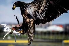 baleset, drón, repülő, sas, svájc, ütközés, veszély