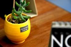 a jövő irodája, egészséges munkahely, irodai trendek, munkakörnyezet