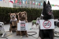 állatkísérlet, kínzás, kozmetikum, szépségipar, tilalom