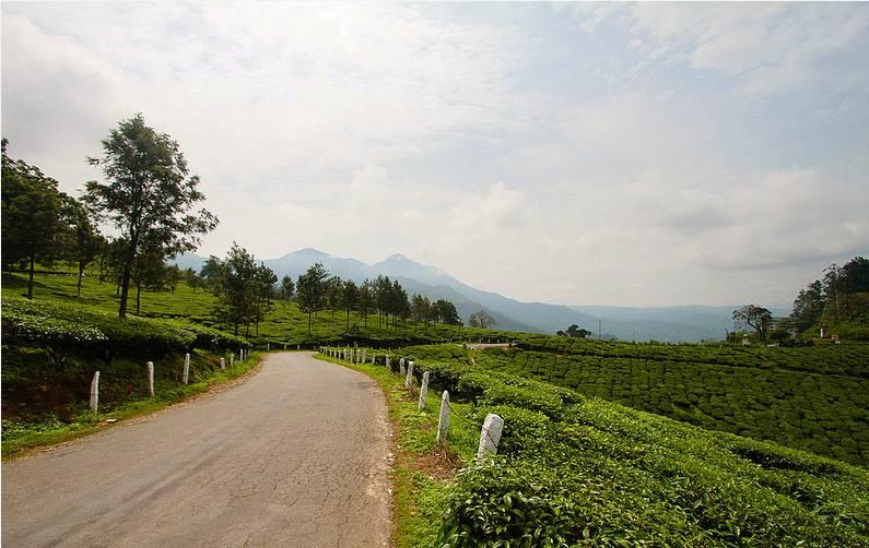 Teaültetvény (Fotó: Flickr/Pranav Bhasin)