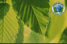 elismerés, fenntartható, green brand, minősítés, zöld vállalat