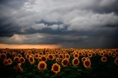 amerika, áramszolgáltató, aszály, csapadék, esőcsinálás, felhő, felhőmanipulálás, időjárás, időjárásmódosítás, innováció, kánikula, klímaváltozás, meteorológia, usa, vízerőmű