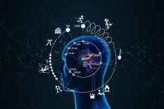 agykutatás, idő, kísérlet, kutatás, patkány
