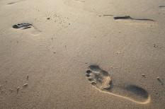 energiahatékonyság, it a cégben, ökológiai lábnyom