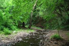 Csarna-völgy, erdő, erdőirtás, környezetvédelem, wwf