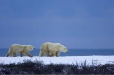 klímavészhelyzet, környezetvédelem