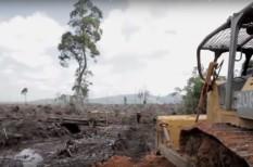 állatvédelem, erdőirtás, fogyasztási cikk, indonézia, minősítés, önszabályozás, orángután, pálmaolaj, rspo, testápoló, ültetvény