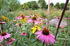 bécs, környezet, rovarok, védelem