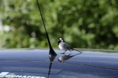 fenntarthatóság, környezetvédelem, madarak, Magyar Madártani Egyesület