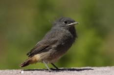 környezetvédelem, madárvédelem, Magyar Madártani Egyesület