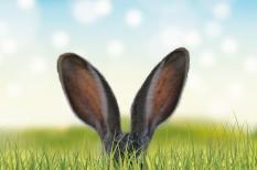 hulladék, húsvét, környezetvédelem, plasztik