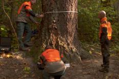 erdő, környezetvédelem