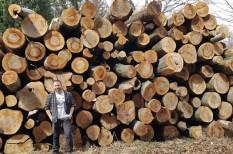 erdő, fakitermelés, fenntarthatóság, környezetvédelem