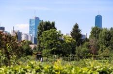 bécs, faültetés, klímavédelem, zöldítés